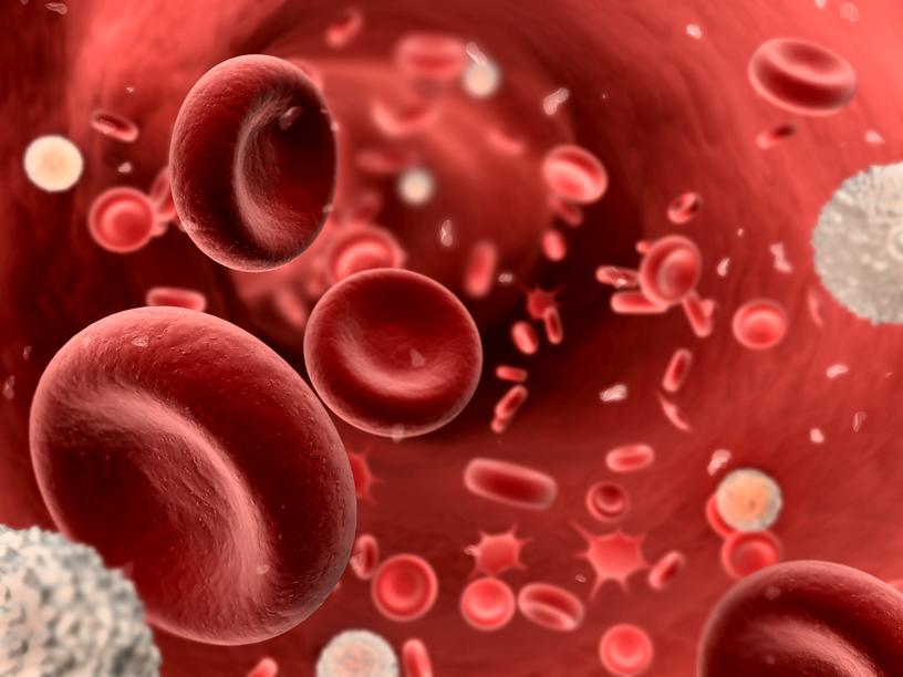 vérlemezkék és visszér