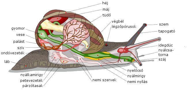 fotó a nemi szervek visszéréről