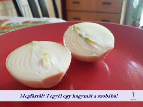 hagyma recept visszér)