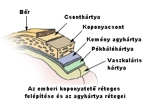 visszér és koponyaűri nyomás)