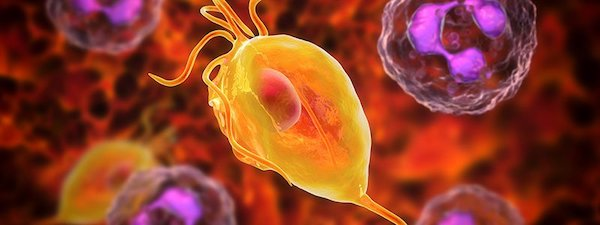 kezelik a kismedencei varikózisokat? gyógyítsa meg a visszér vizelettel