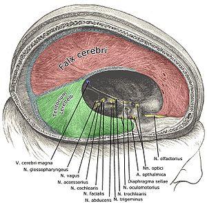 az epidurális tér visszér)