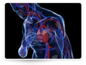 Egészségügyi információk | easyJet
