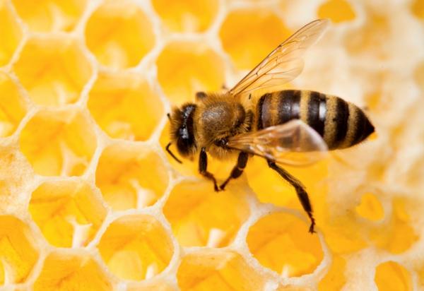 milyen méz hasznos a visszér ellen)