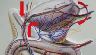 zab visszér tromboflebitis hogyan lehet megszabadulni a visszeres zúzódásoktól