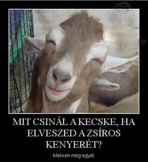 kecske zsír visszér)