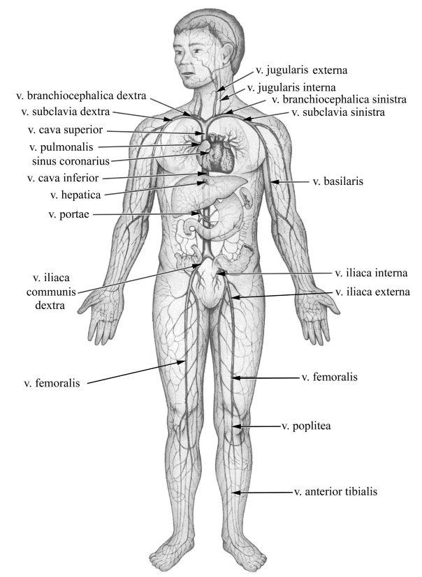Hogyan lehet enyhíteni a prosztata adenoma ödémáját