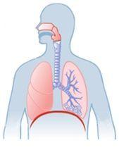 hirudoterápiás kezelési rend a visszér ellen